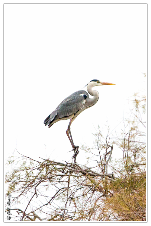 Parc Ornithologique de Pont de Gau Les Saintes Maries de la Mer